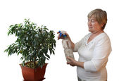 Elderly woman sprinkled ficus — Stock Photo