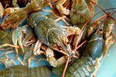 Crayfishs — Foto Stock