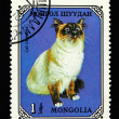 Mongolian postage stamp with cat - Stok fotoraf