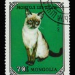 Постер, плакат: Postage stamp with Siamese cat