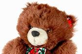 Bär — Stockfoto