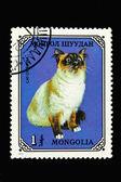 Moğol posta pulu ile kedi — Stok fotoğraf