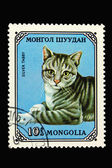 Postage stamp with silver tabby cat — Stock Photo