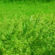 Meadow grass — Stock Photo