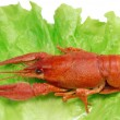 Boiled crayfish on lettuce - Stock Photo