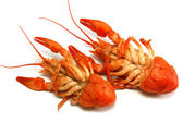 Boiled crayfishs head over heels — Stock Photo