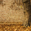 Autumn scenic - Stock Photo