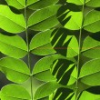 Leaf array — Stock Photo