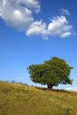 Lonely tree 02 — Stock Photo
