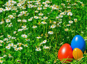 Coloured eggs in the meadow — Stock Photo