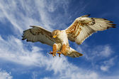 Ferruginous attack — Stock Photo