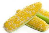 Fresh harvest corn — Stock Photo