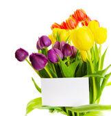 Tulpe-geschenk — Stockfoto