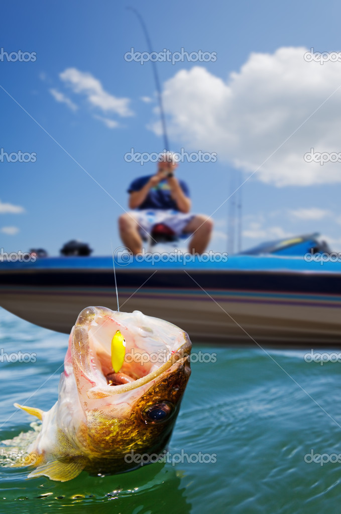 Fisherman in a boat catching a walleye — Stock Photo #2965944