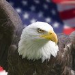 American eagle with flag — Stock Photo