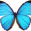 Blue butterfly — Stock Photo #2885331