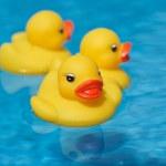 橡胶鸭子游泳 — 图库照片