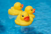 Rubber duck swimming — Stock Photo