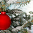 Bright red Christmas bauble on tree — Stock Photo