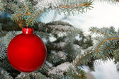 Bright red Christmas bauble on tree — Stok fotoğraf