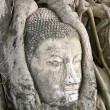Foto Stock: Buddhhead in tree