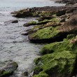 Rocky shore — Stock Photo