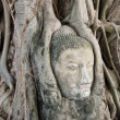 Stock Photo: Buddhhead in tree