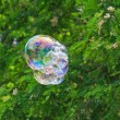 Soap bubble on a floral background — Stock Photo