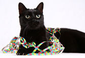 Black cat and streamers — Stock Photo