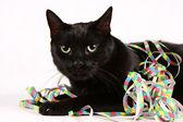 Serpentinas y gato negro — Foto de Stock