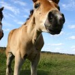 Foal — Stock Photo