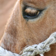 Horse's eye — Stock Photo