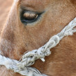 Horse'e eye — Stock Photo
