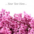 Foto Stock: Pink lilac background