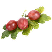Red gooseberries on leaves — Stock Photo