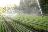 Watering of nursery plantation — Stock Photo