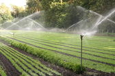Watering of nursery plantation — Stock Photo
