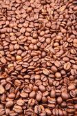 Coffee beans — Photo