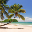 Coconuts on the beach — Stock Photo #2890412