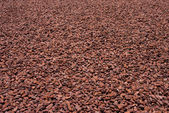 Cocoa beans — Stock Photo