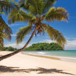Coconuts on the beach — Stock Photo #2958242