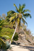 Tropical beach landscape — Stock Photo