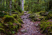 Stonny path — Stock Photo