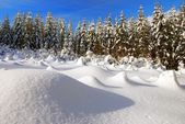 Wintry scenery with snowy glade — Stock Photo