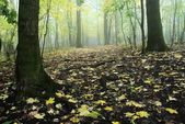 Autumnal forest — Stock Photo