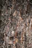 The texture of wood — Stock Photo