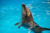 Delfiner — Stockfoto