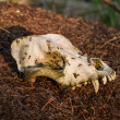 Stock Photo: Skull in anthill