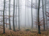 Silent forest in the autumn — Stock Photo