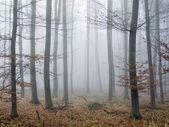 Молчаливый лес осенью — Стоковое фото
